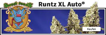 Runtz XL von Sweet Seeds