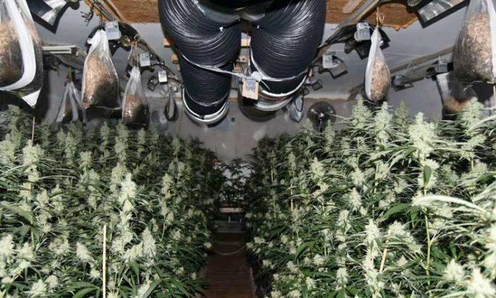 Polizeifoto einer illegalen Indoor-Cannabisanlage
