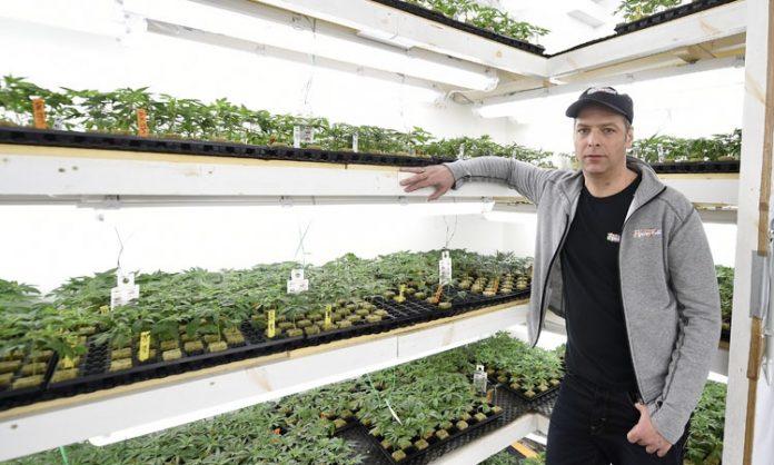 Alexander Kristen von Flowery Field vor Cannabis-Stecklingen