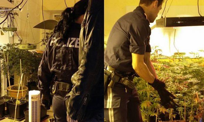 Zweigeteiltes Bild: Polizisten entdecken eine Indoor-Cannabisanlage