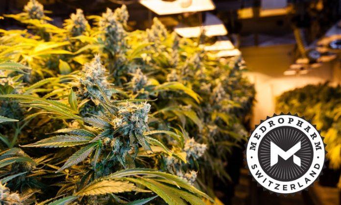 Indoor-Cannabisanlage, Logo von Medropharm