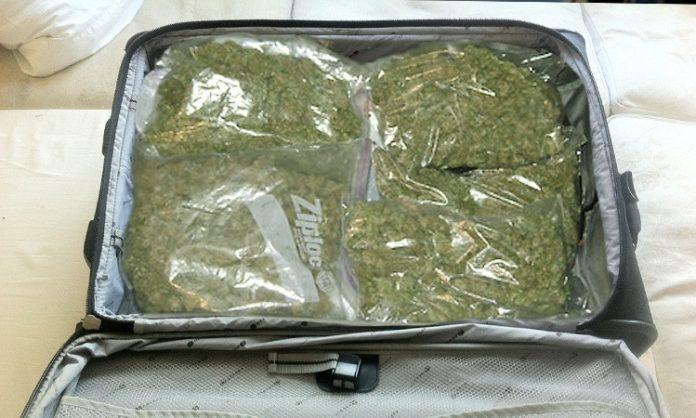 Ein Koffer vollgepackt mit Weed
