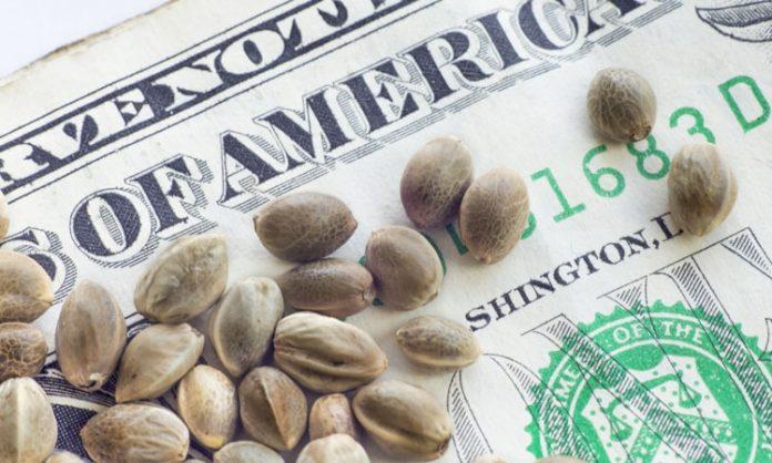 Cannabissamen auf Dollar-Schein