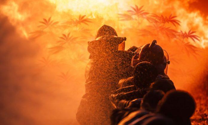 Feuerwehr löscht Cannabispflanzen