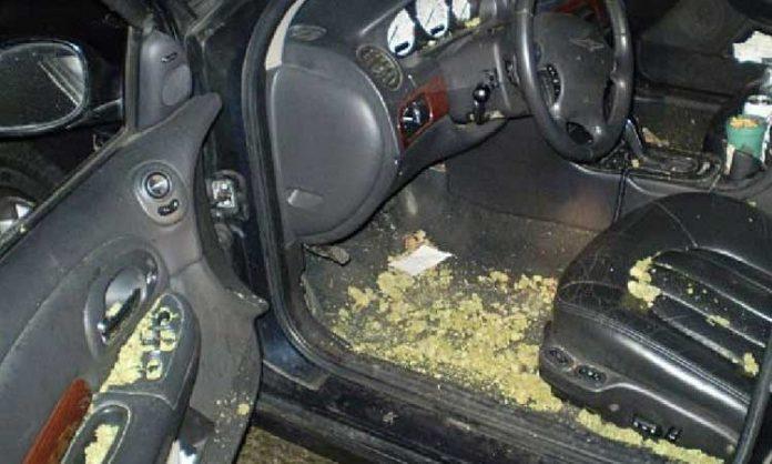 Auto mit Fahrzeugraum voller Gras