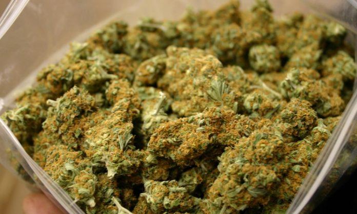 Marihuana-Blüten in einem großen Baggy