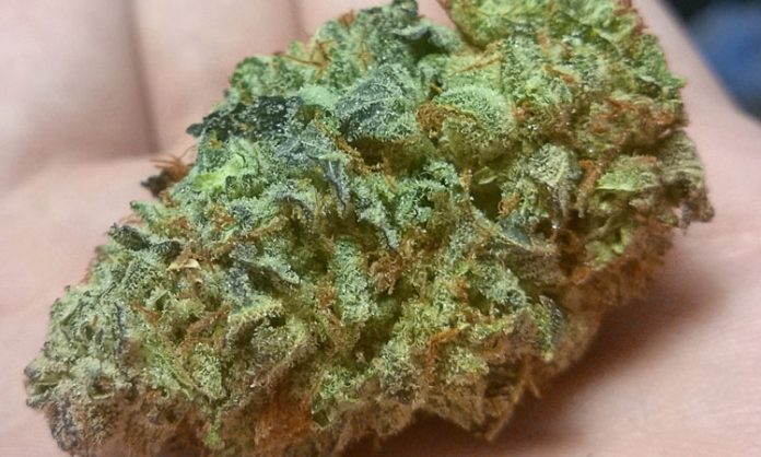 Marihuana-Blüte in Nahaufnahme