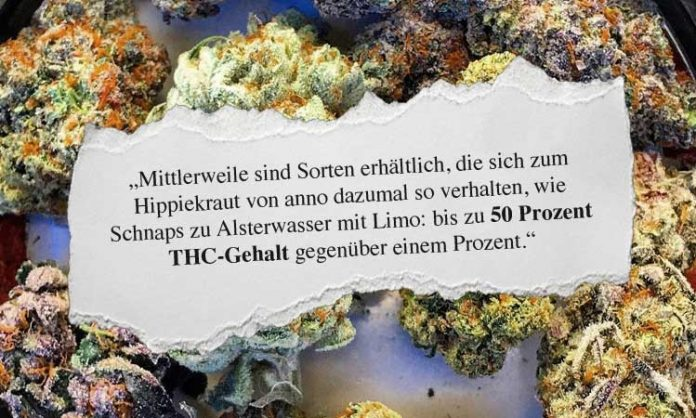 Zeitungs-Zitat vor Cannabisblüten