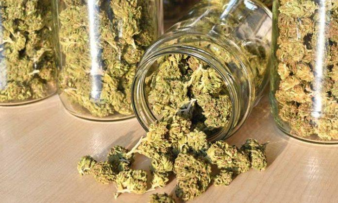 Vier Einmachgläser gefüllt mit Marihuana