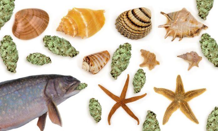 Eine Fotomontage aus Muscheln, Fischen und Marihuana