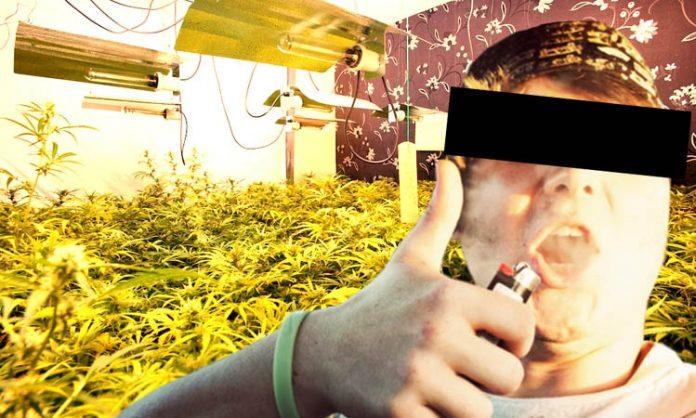 Fotomontage: Junger Mann und Cannabis-Anlage