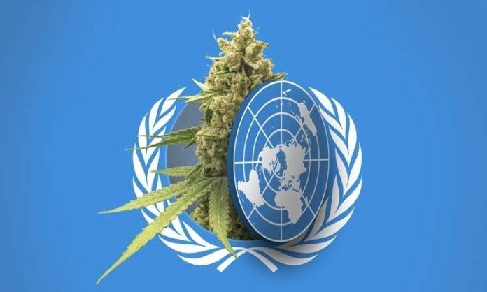 Fotomonatge: das WHO-Logo mit Cannabis-Pflanze