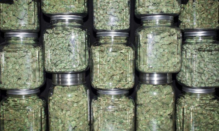 Einmachgläser gefüllt mit Cannabis