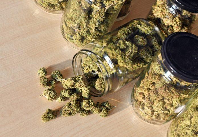 Cannabisblüten in Gläsern