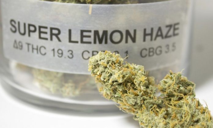 Super Lemon Haze Blüte aus der Verkaufsstelle