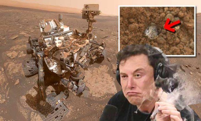 Foto-Montage: Mars-Rover, Marsgestein, rauchender Elon Musk