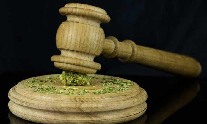 Ein Richterhammer zerquetscht eine Marihuanablüte