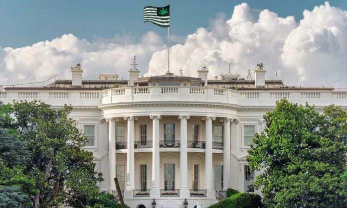 Diese Fotomontage zeigt das Weiße Haus mit einer Cannabis-Flagge auf dem Dach