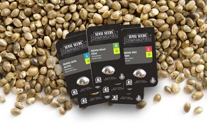 Dutzende Hanfsamen sowie Verpackungen der Firma Sensi Seeds