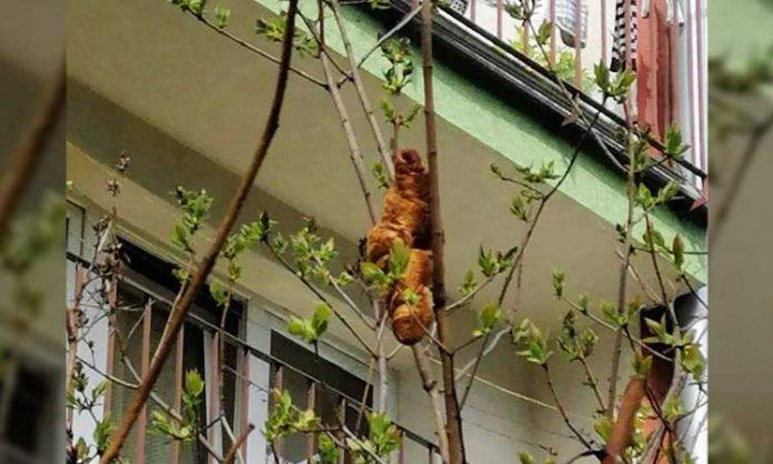 Ein Croissant in Baum