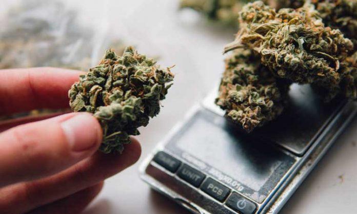 Cannabis wird abgewogen, eine Hand hält eine Blüte hoch