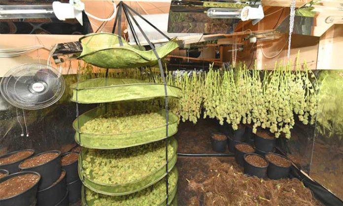 Cannabis in Essen