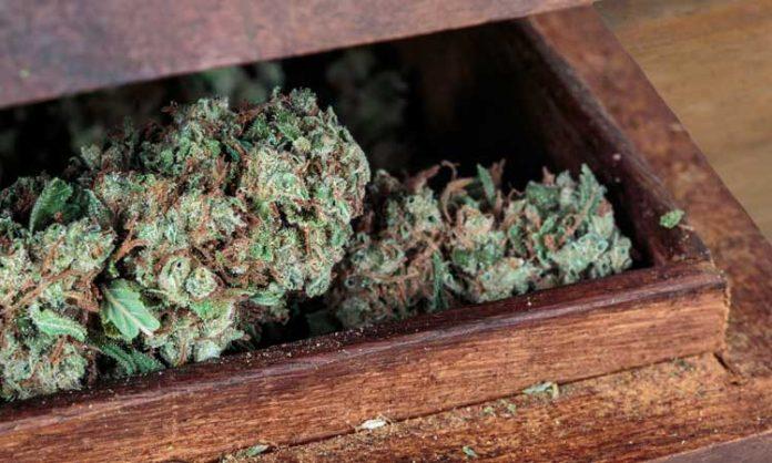 Cannabis richtig lagern