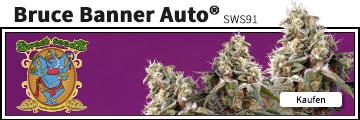 Bruce Banner Auto von Sweet Seeds