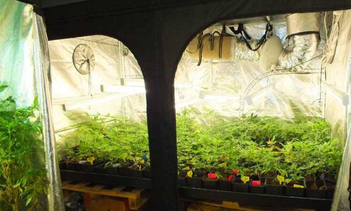 Cannabis Schleswig